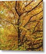 Deciduous Forest In The Autumn Metal Print