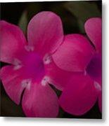 Decorative Floral A62917 Metal Print