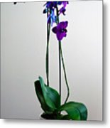 Decorative Orchid Photo A6517 Metal Print
