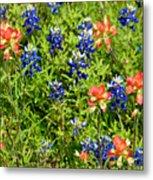Decorative Texas Bluebonnets Meadow Digital Photo G33117 Metal Print