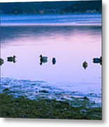 Decoy Deception Metal Print