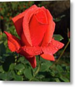 Dedicated To All Women In The International Women's Day Metal Print