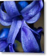 Deep Blue Flower Metal Print