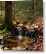 Deep Forest Creek Metal Print