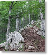 Deep Forest Rocky Path Nature Metal Print