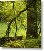 Deep Forest Scenic Metal Print
