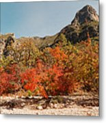 Deep In Mckittrick Canyon - Lost Maples And Ponderosa Pines Against Backdrop Of Guadalupe Mountains  Metal Print