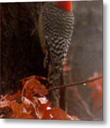 Deep In The Forest Woodpecker Metal Print