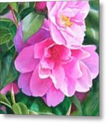 Deep Pink Camellias Metal Print by Sharon Freeman