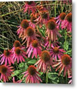 Deep Pink Echinacea Straw Flowers Green Leaf And Grass Background 2 9132017 Metal Print