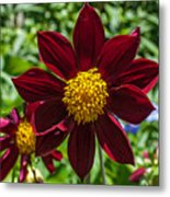 Deep Red And Yellow Flowers Metal Print
