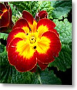 Deep Red Bright Yellow Metal Print