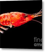 Deep Sea Shrimp Metal Print
