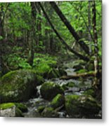 Deep Woods Stream 3 Metal Print