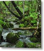 Deep Woods Stream Metal Print