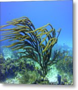 Deepwater Gorgonia Just Flowing In The Wind Metal Print