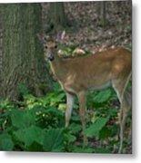 Deer 7414 Metal Print
