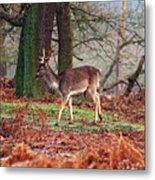 Deer Among The Ferns Metal Print
