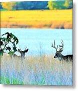Deer At Sunset Metal Print