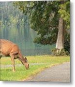 Deer By Crescent Lake Metal Print