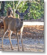 Deer Doe - 1 Metal Print