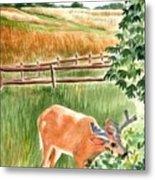 Deer Eating Leaves Metal Print