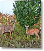 Deer Family Metal Print