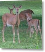 Deer Family Out For Evening Stroll Metal Print
