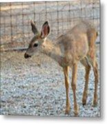 Deer Fawn - 2 Metal Print