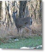 Deer Going Metal Print