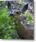 Deer Having Lunch Metal Print