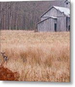 Deer In Hiding Metal Print