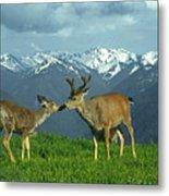 Ma-181-deer In Love  Metal Print