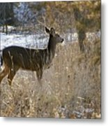 Deer in Morning light Metal Print