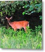 Deer In Overhang Of Trees Metal Print