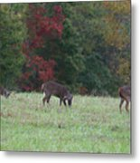 Deer In The Fall Metal Print