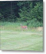 Deer In The Midst Metal Print