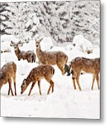 Deer In The Snow 2 Metal Print