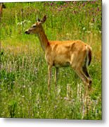 Deer In The Wild Metal Print