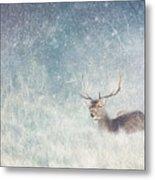 Deer In Winter Scene Metal Print