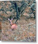 Deer In Woods Metal Print