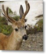 Deer Iv Metal Print