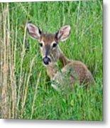 Deer Laying In Grass Metal Print