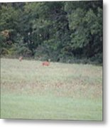 Deer Looking Up Towards Me Metal Print