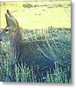 Deer Lying Down Metal Print