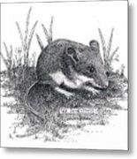 Deer Mouse Metal Print