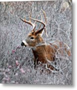 Deer On A Frosty Morning  Metal Print