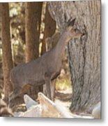 Deer On The Look Out Metal Print