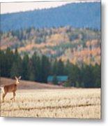 Deer Poses In The Fall Metal Print