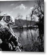 Deer Skull Metal Print